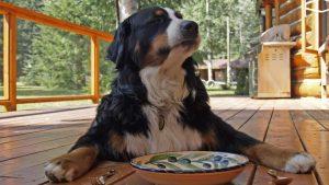 Hund leerer Teller Napf