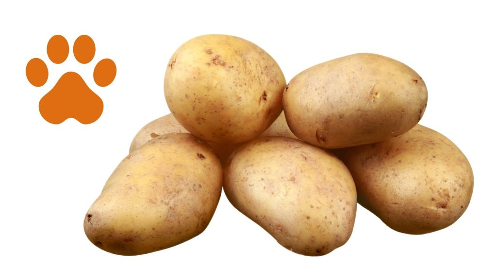 duerfen hunde kartoffeln fressen